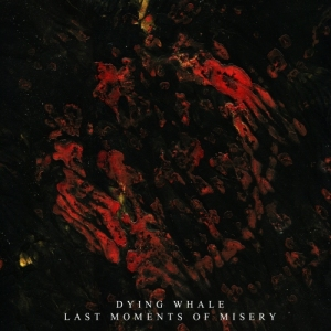 dying-whale-last-moments-of-misery