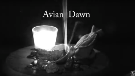 sourvein-avian-dawn