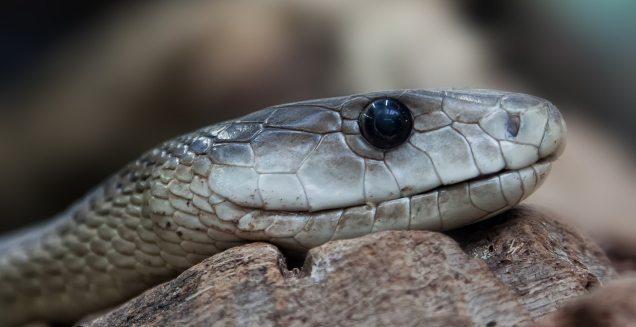 snake-toxic-dangerous-terrarium-38290