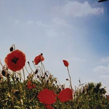 fluisteraars bloem